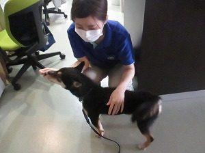 保護犬 001