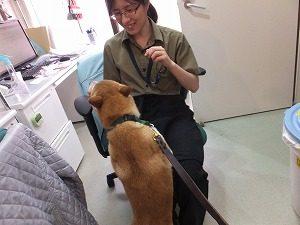 2016_0731保護犬0010