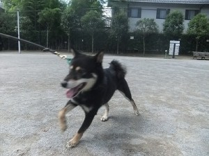 j-sasuke0816