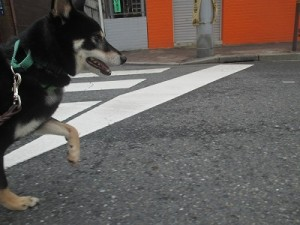 j-sasuke1018