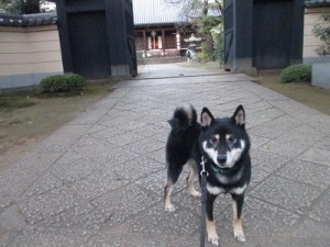 j-sasuke1205