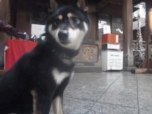 j-sasuke201601031