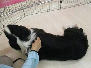 2016_0901 保護犬 018